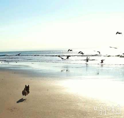 Reddit网友dayngerzone说第一次带他们家狗去海边,一看见那么多海鸟,他们家狗开心的简直灰起。。