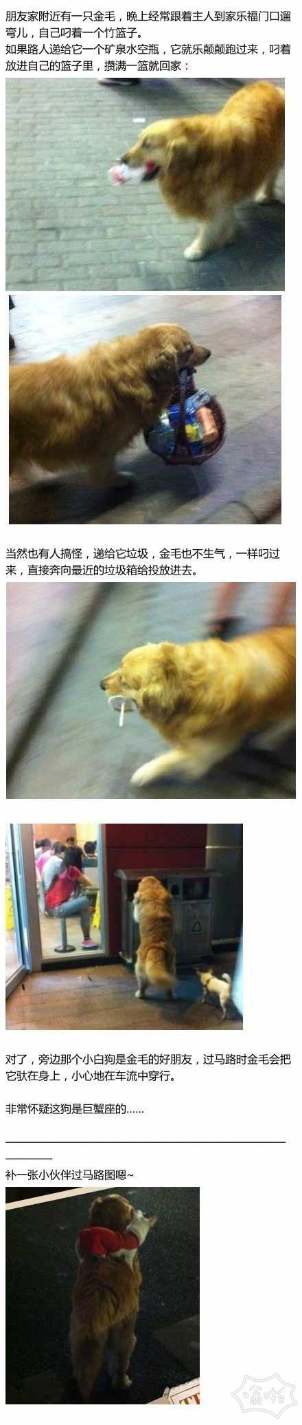 聪明的狗狗:狗的智力能高到什么程度?