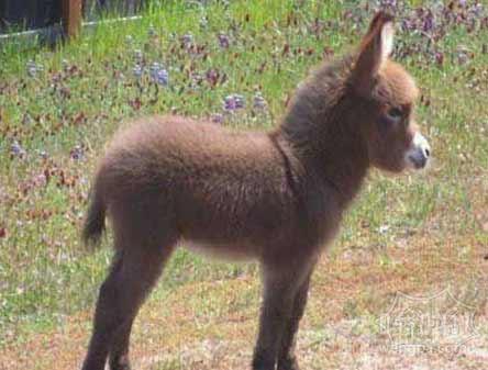 不是所有的毛驴都能称为小毛驴