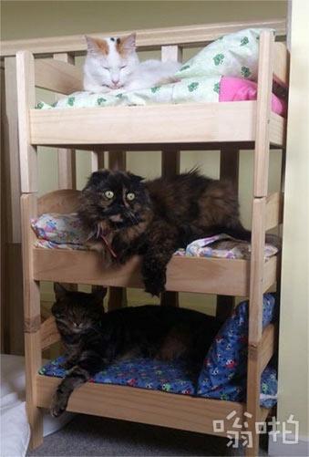 我也在宜家为我的宠物们买了床