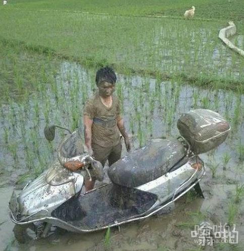 冲出马路,走向稻田