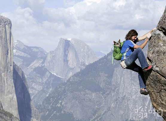 极限生活:汪星人与主人共生死同攀险峰