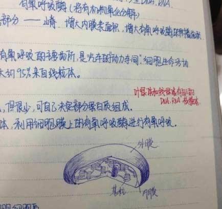 学霸神一样的笔记本再次亮瞎我眼