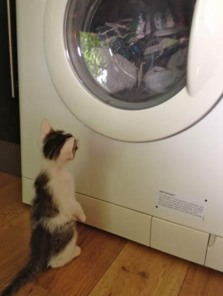 我把他最喜欢的毛毯在洗涤时,他就坐在这样,至少半小时。