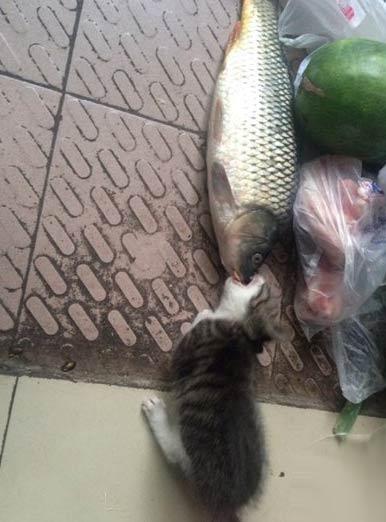 心有鱼而力不足