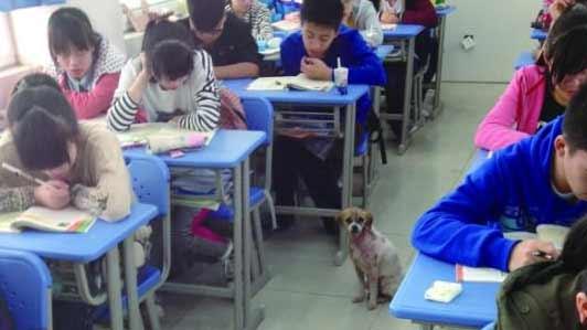 """合肥一中现""""癞皮""""蹭课狗 被称为""""狗学霸"""""""