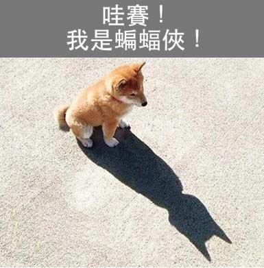汪星人变身蝙蝠侠