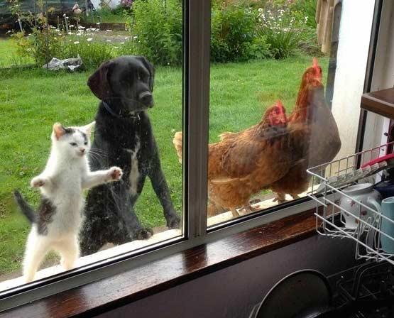 当我们家每天中午做饭时,这一群吃货就围了上来