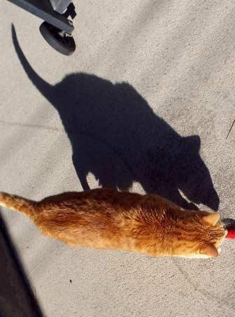 喵星人的影子怎么像老鼠
