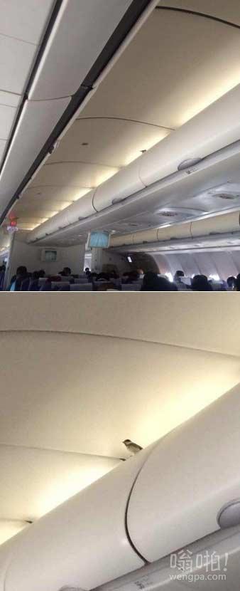 小鸟藏身飞机机舱飞1700公里 网友:买票了吗