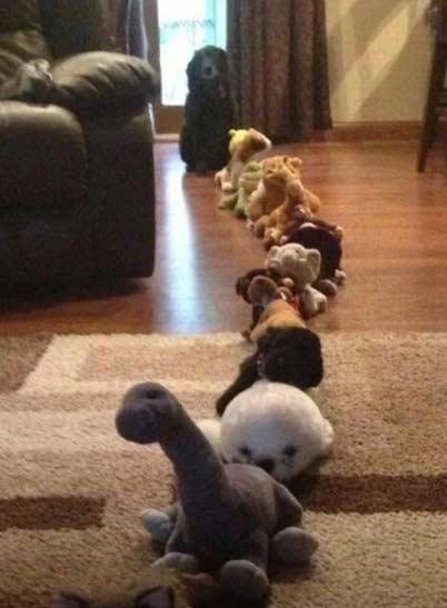 把家里的毛绒玩具排成长队开始假装发糖果之后。