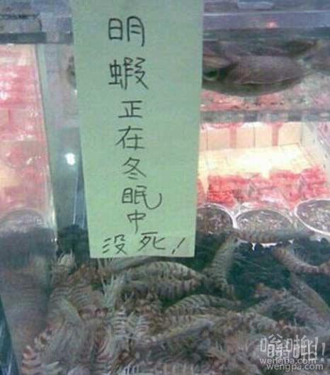 老板把虾叫醒给我看看
