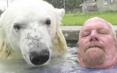 加拿大男子和北极熊游泳池内亲密玩自拍(视频)