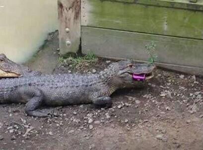 动物园拍照一定要小心