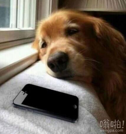 你在等谁的电话