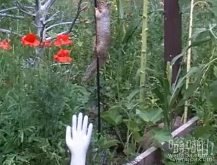 难啃的骨头:欢快的时刻 很执着的松鼠反复向上爬,但就是上去不喂鸟器(视频)