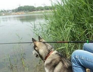 新买的鱼竿送的支架