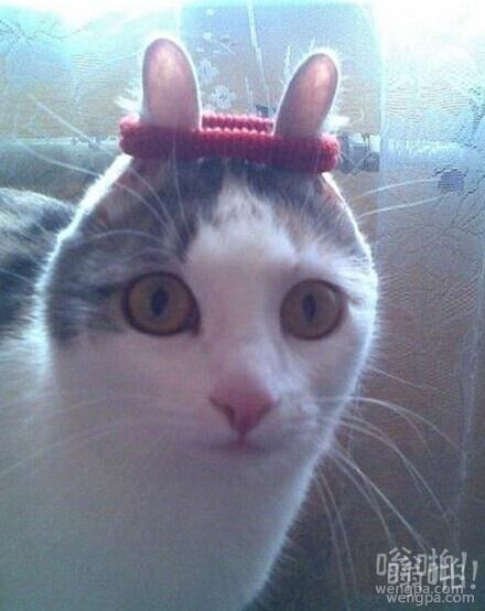 给我的猫扎上头绳后