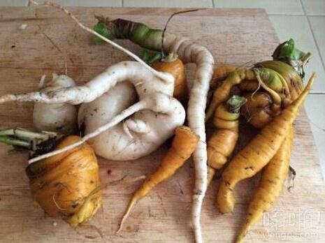 菜地里刚扒出来的,我估计这是世界上最丑的胡萝卜了吧