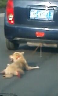 汕头街头惊现虐狗事件 开轿车将一土黄狗拖行留血痕(视频)