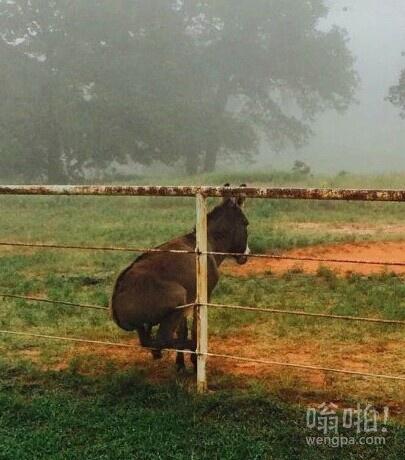 一头感觉有好多心事的驴。。。这落寞的背影,这坐姿。。。真的是