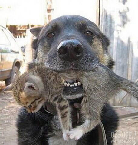 谁说他们是敌人,狗从着火的房子救了这个小宝宝