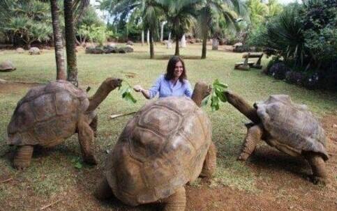 加拉帕戈斯陆龟