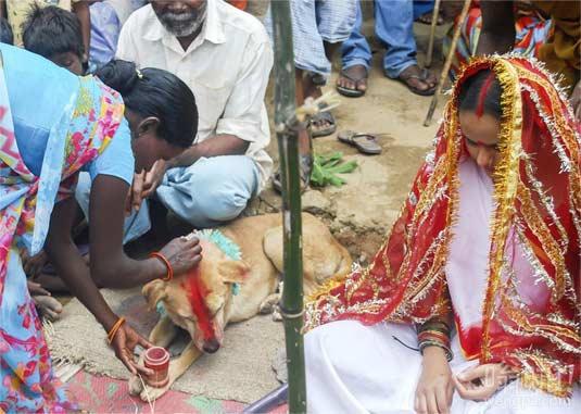 印度18岁少女被迫与流浪狗结婚 旨在抵御厄运