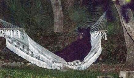 会享受的狗熊