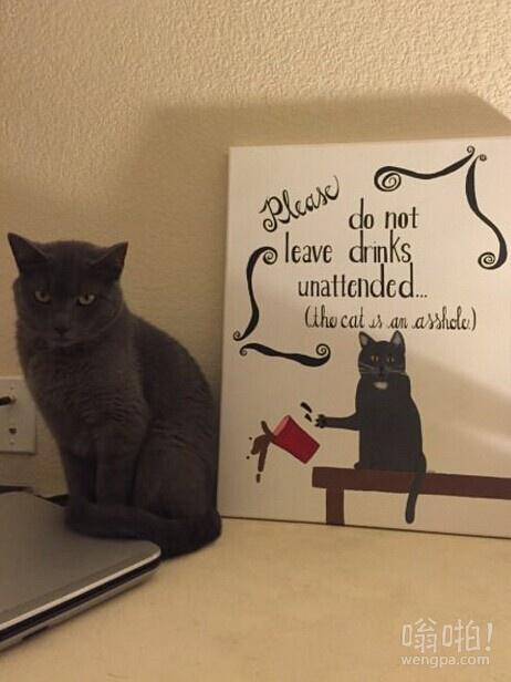 我的猫却笑不出来