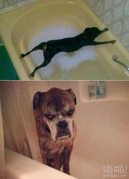 当主人给汪星人洗澡时