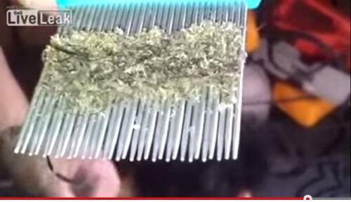 OMG:7岁女童梳出百万只头虱 台媒:它们在她头上筑巢