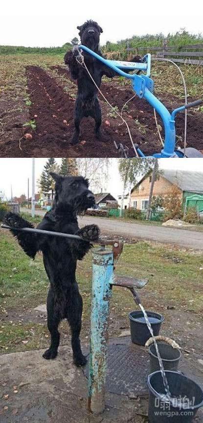 有用的狗狗