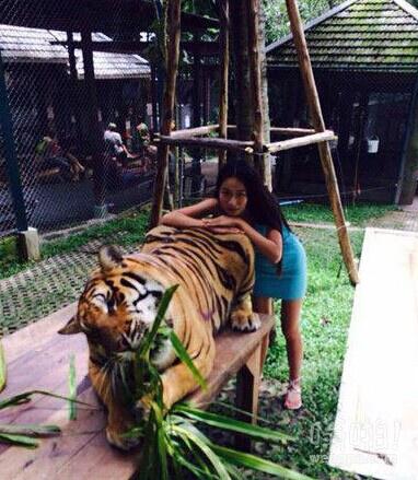 老虎改吃草后屁股也可以摸了