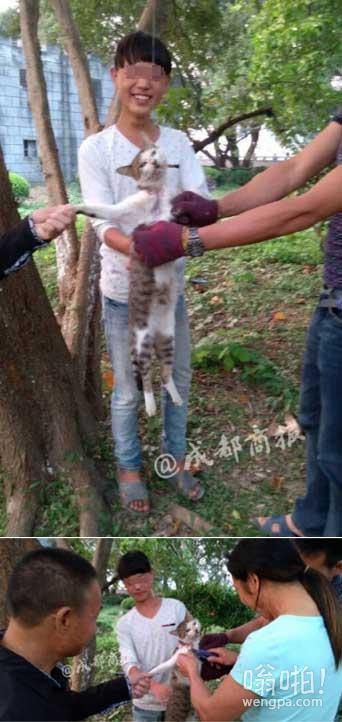 又现虐猫事件:网传浙江多名男女用美工刀残忍活剥小猫 并微笑表示:肉好吃的很