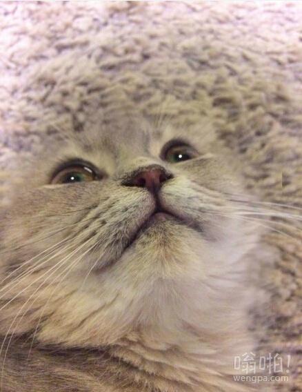 养猫小贴士:挑选地毯请一定要避开宠物的毛色!一定!我已经记不清有多少次一低头:卧槽!地毯上怎么长个脸!!!