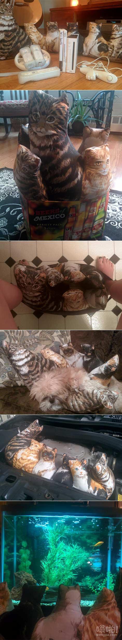 家人对猫过敏,而我又喜欢猫怎么办