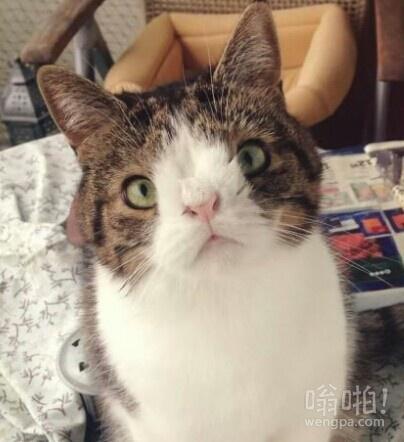 猫患有唐氏综合症,他的名字叫蒙蒂。