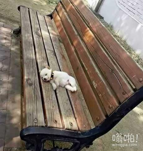 早上发现一个无家可归者躺在公园的长椅上过夜