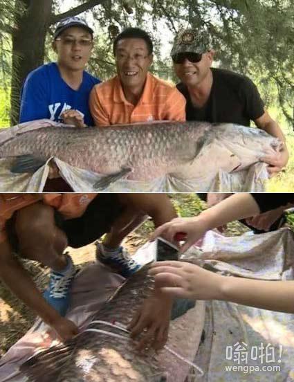 江苏3名垂钓爱好者蹲守7天钓上百斤重大鱼