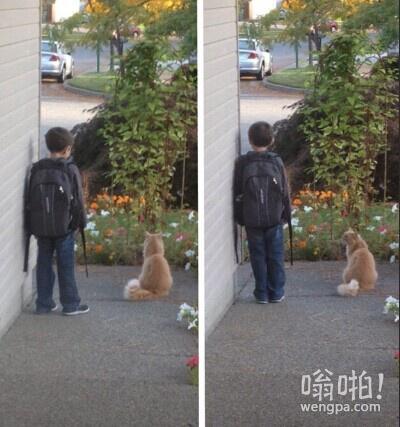 这小猫每天早上跟他一起等校车