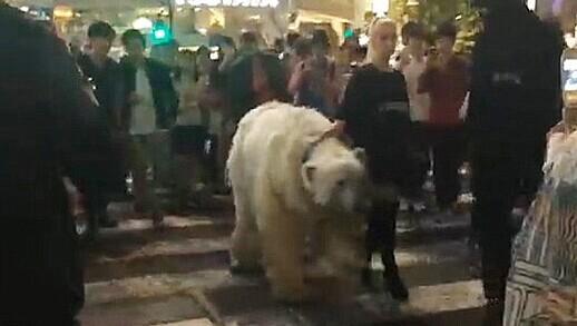女子闹市街头溜北极熊引骚动 路人纷纷拿手机拍照(视频)