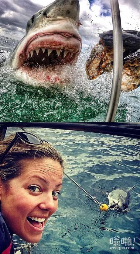 美女教师在南非潜水近距离接触鲨鱼照片走红(视频)