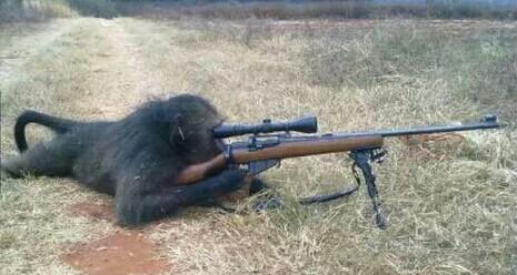黑色死神-〉〉ご滺嘻猴.+