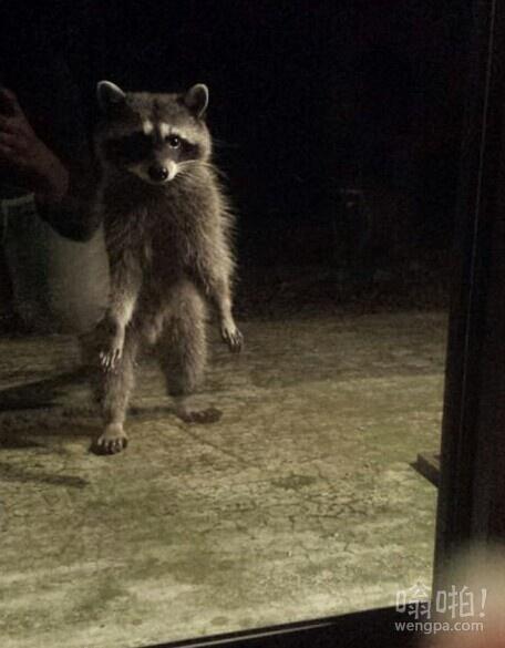 这货每天很晚来敲我家的窗户