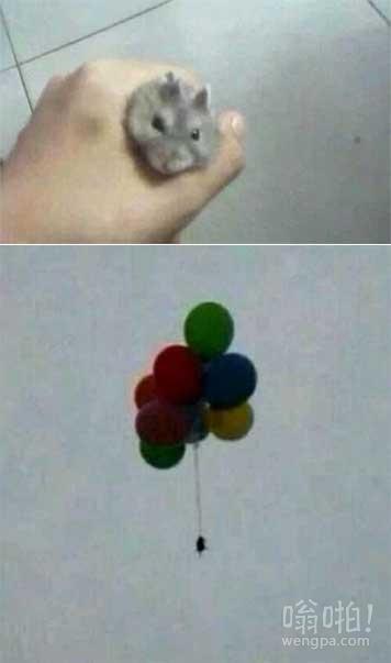 今天抓到一只小小老鼠,看它实在可爱,于是花了5块钱左右给它办了一场说走就走的旅行