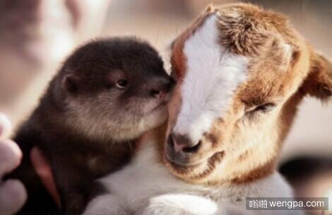 这些图片证明猫、狗、兔子、猴子、毛驴、马、羊它们都是很好的朋友
