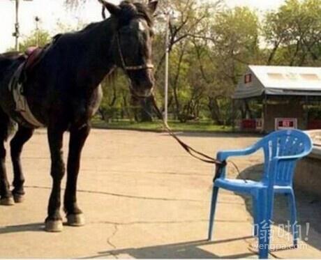 我明明把马拴好的怎么不见了