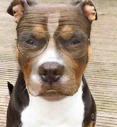 我的狗才几岁,我给它戴了我的眼镜