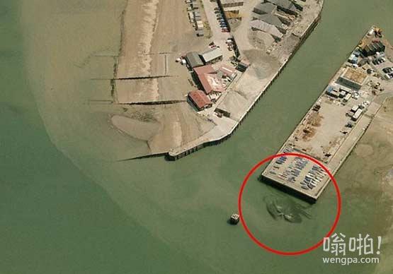 巨型螃蟹惊现英国码头 照片曝光身长15米(视频)